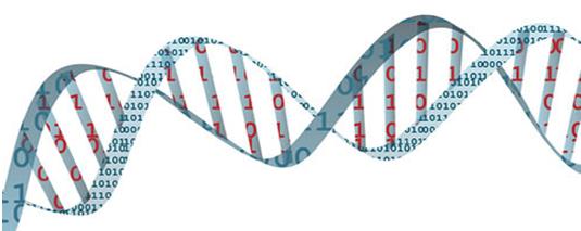 Bio Informatica